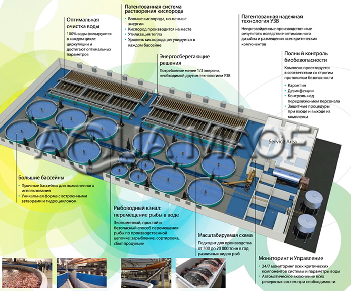 Fish indoor industrial recirculating aquaculture system RAS intensive growing